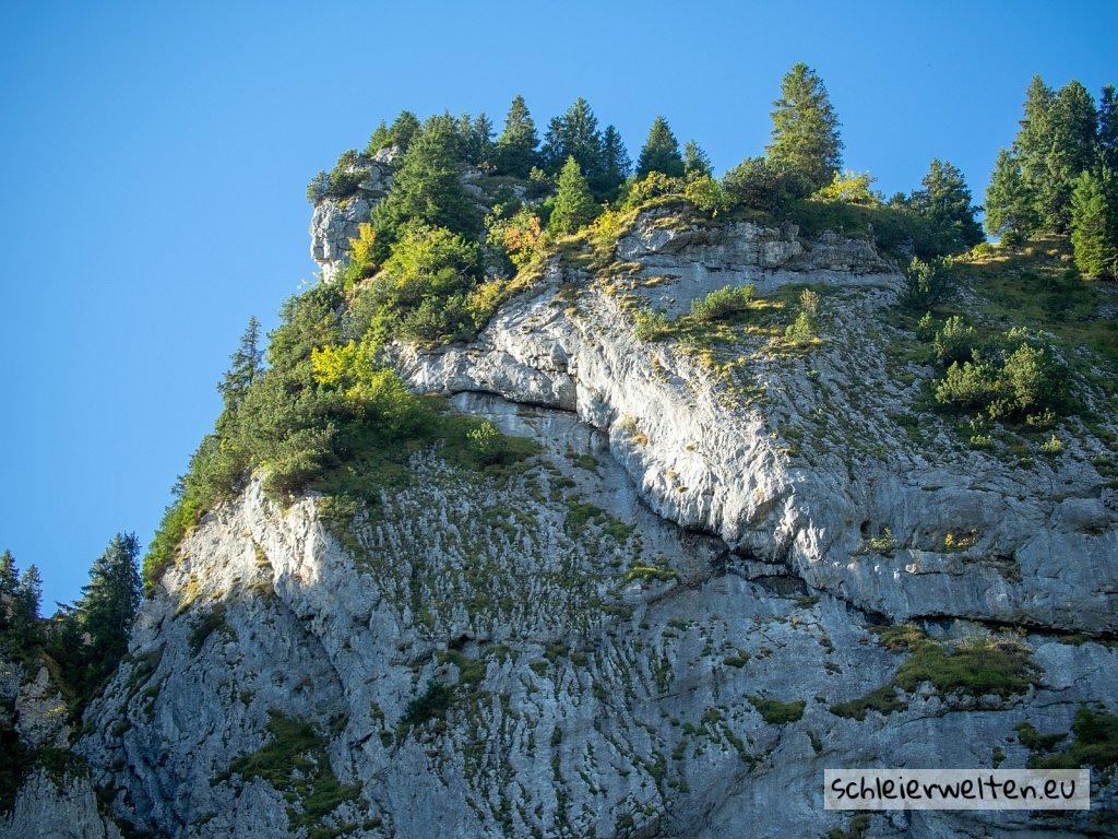 Bäume auf Felsen