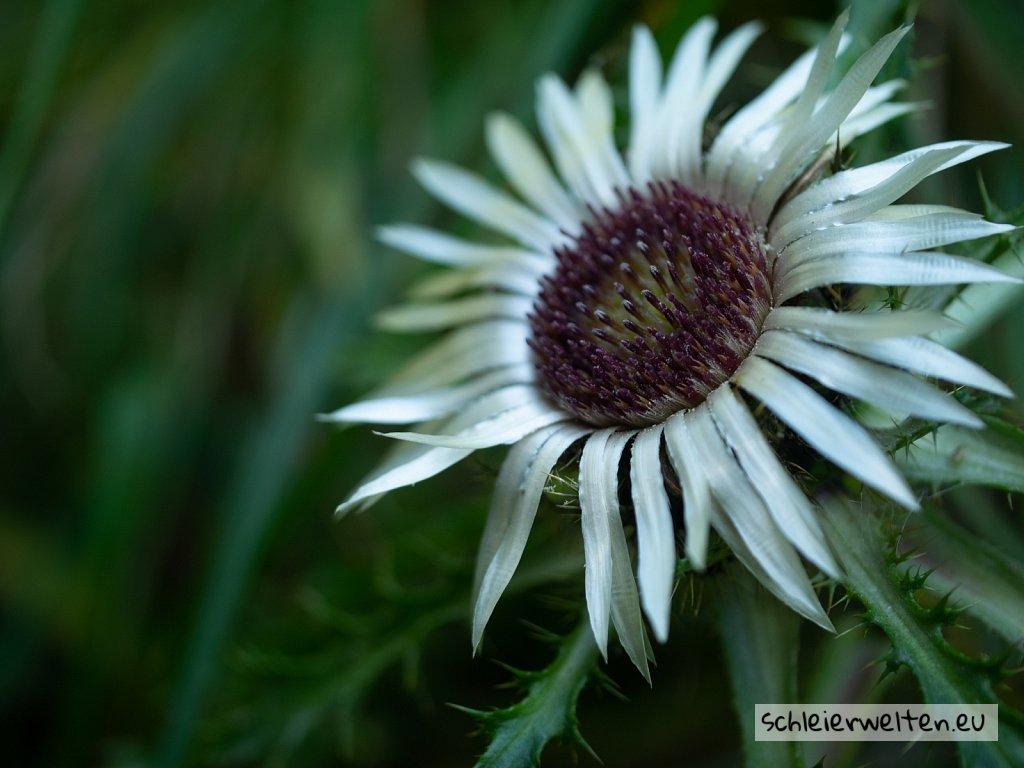 Weiße Pflanze
